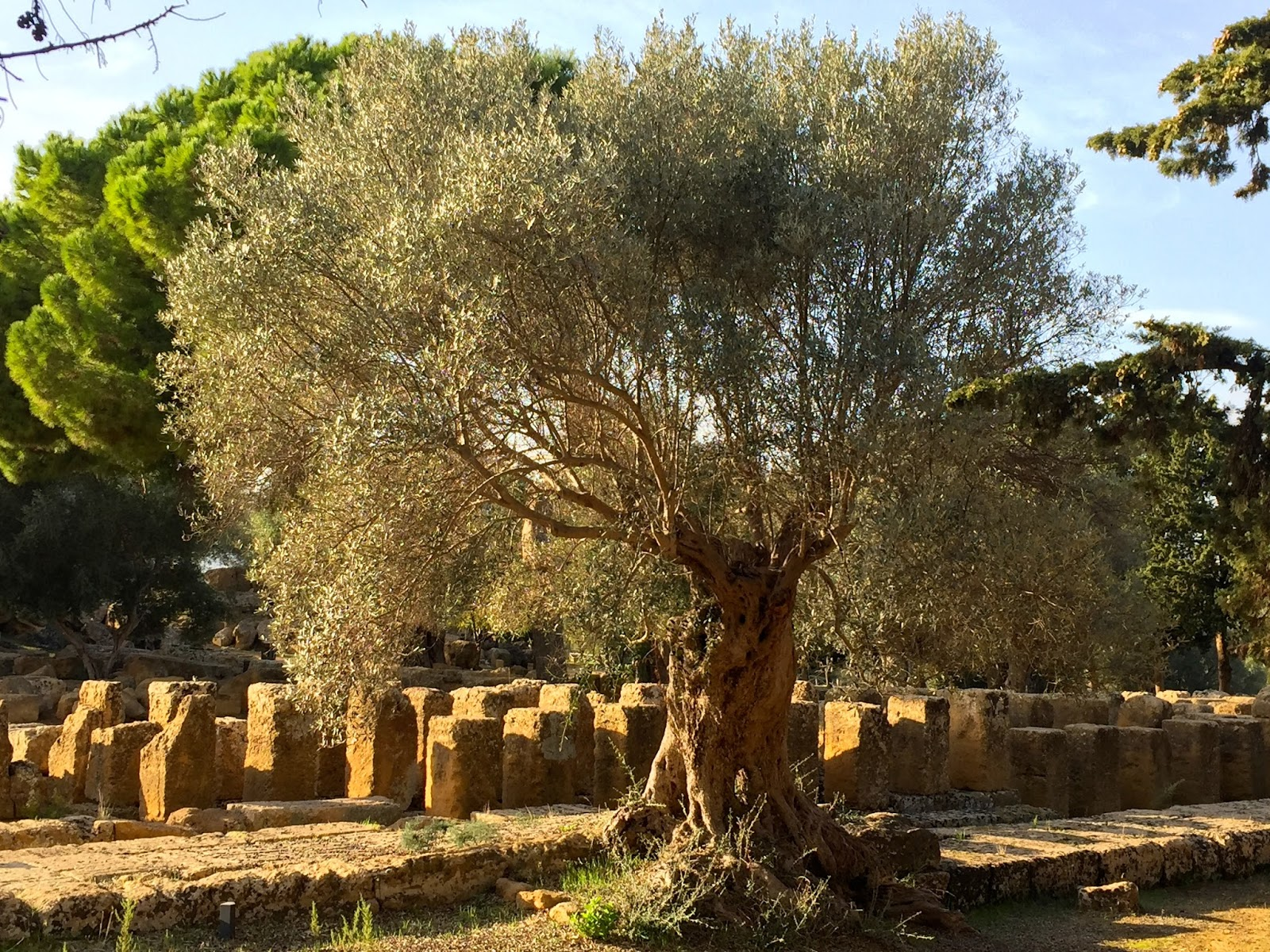 Magical moments: The Valley of the Temples, Agrigento | spaswinefood
