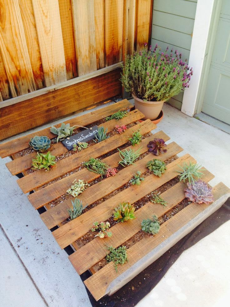 Photozzoflife succulent and plants vertical pallet garden for Vertical pallet garden bed