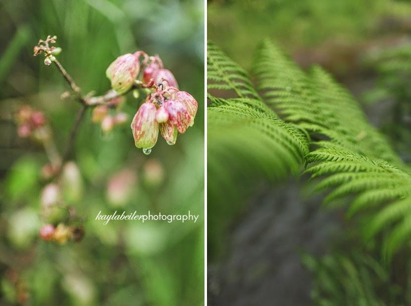 waimea canyon floral photo