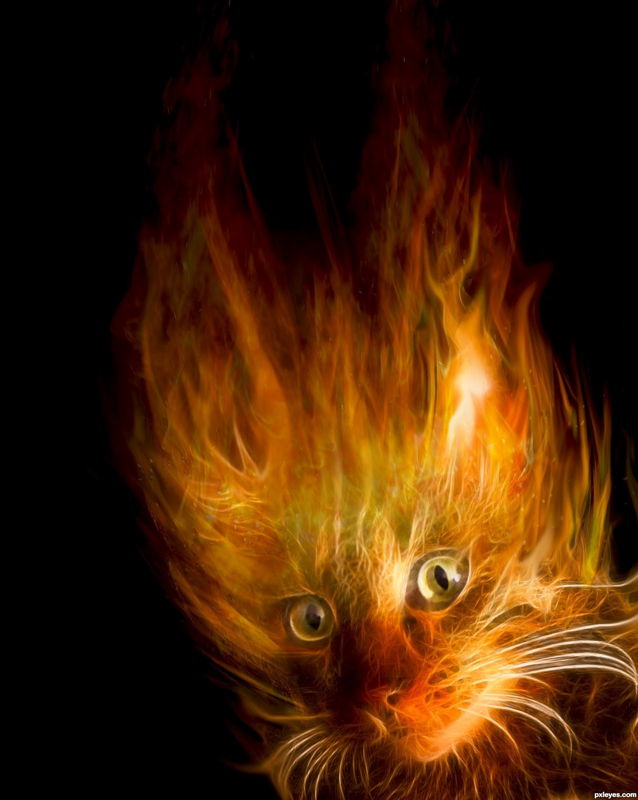 http://1.bp.blogspot.com/-npDrAfVKBUY/T3l0RKUooNI/AAAAAAAABG8/hMb59Ks6Y14/s1600/cat-fire-wallpaper-desktop-wallpaper-fire.jpg