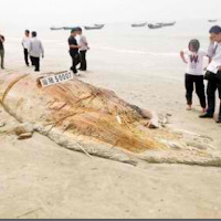 real giant fish