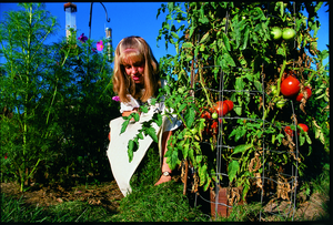 Growing an Awesome Vegetable Garden on a Small Budget