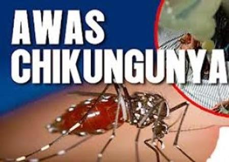 Penyebab Penyakit Infeksi Chikungunya