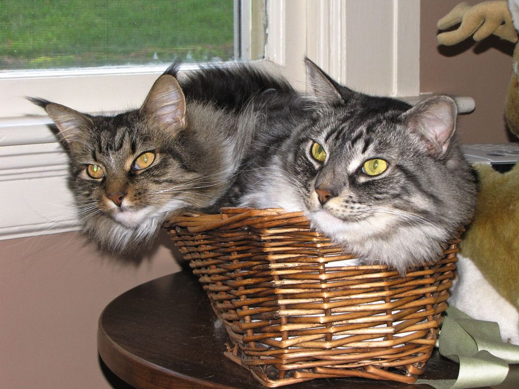 4. Two cats in the bread basket by captured views