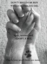 please adopt