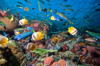 La merveilleuse beauté sous la mer, underwater world in raja ampat, snorkeling in raja ampat