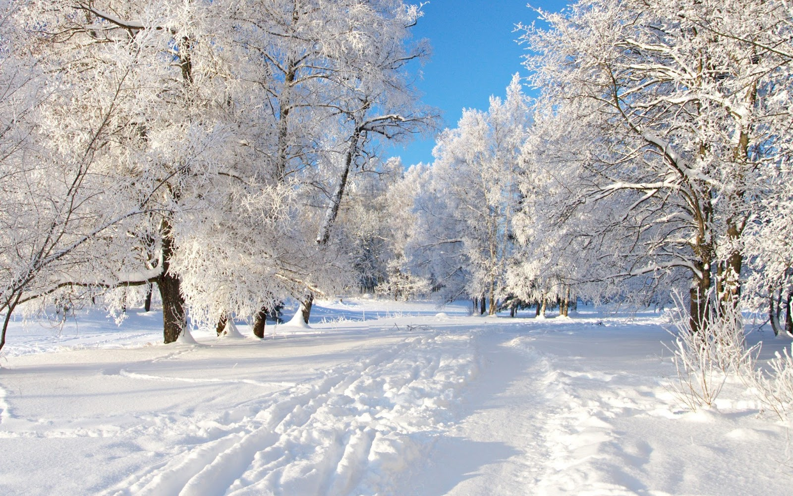 Flash weather 2015 16 winter weather forecast Beautiful snowfall pictures