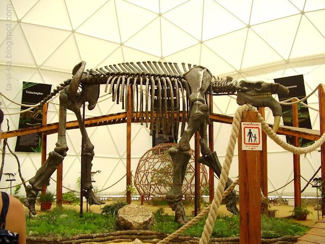 Коктебель. Динотерий. Палеонтологический павильон