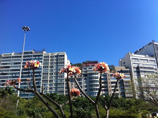 Primavera no Rio/Foto: Marcelo Migliaccio
