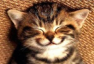 Kucing yang manizZzz