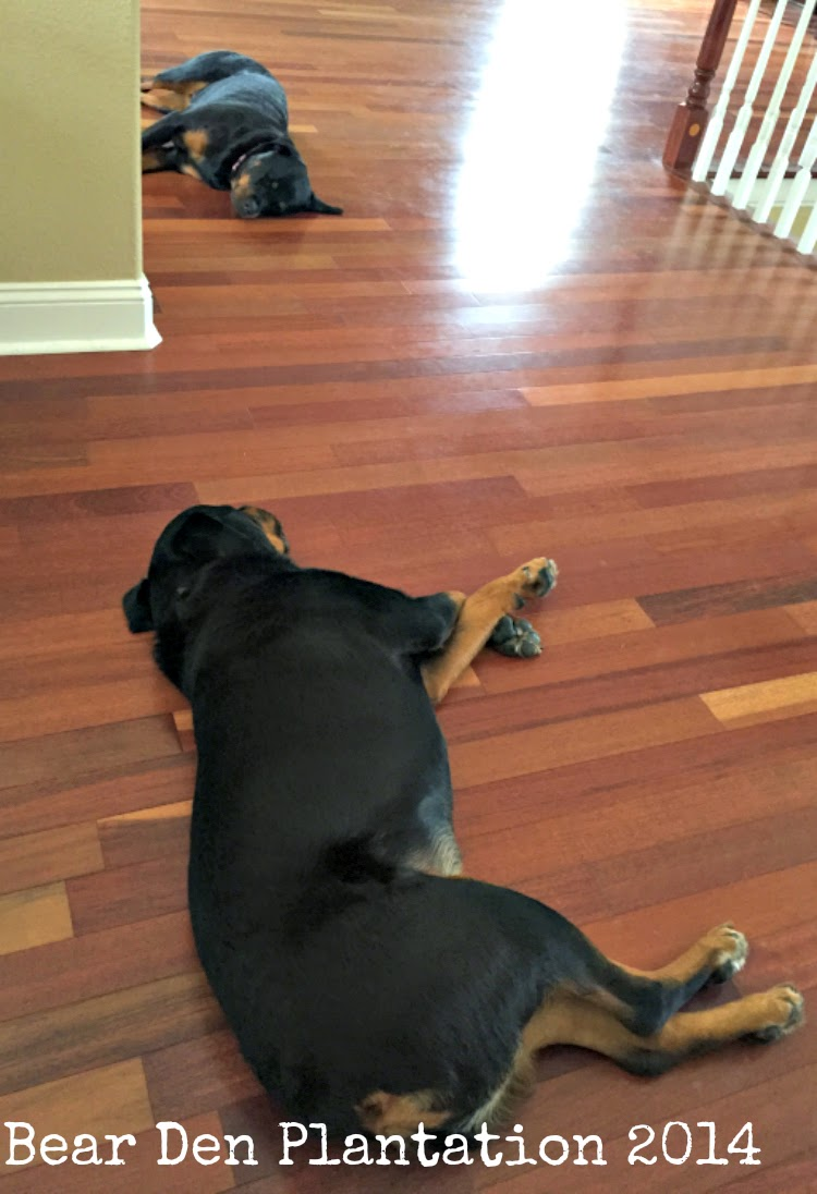 Female and Male Rottweiler Sleeping at the Bear Den Planation