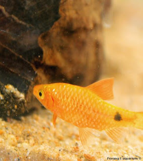 How To Make A Google Document Roster : The Way To Clean Tough Water Stains On Residence Aquariums