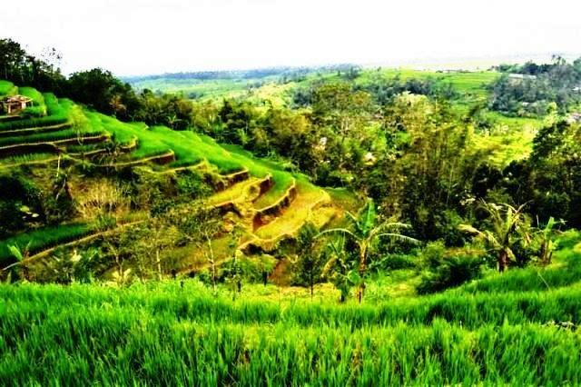 Contoh Surat Perjanjian Jual Beli Tanah yang Baik dan Benar