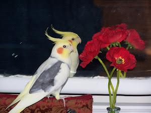 Birdy Boy