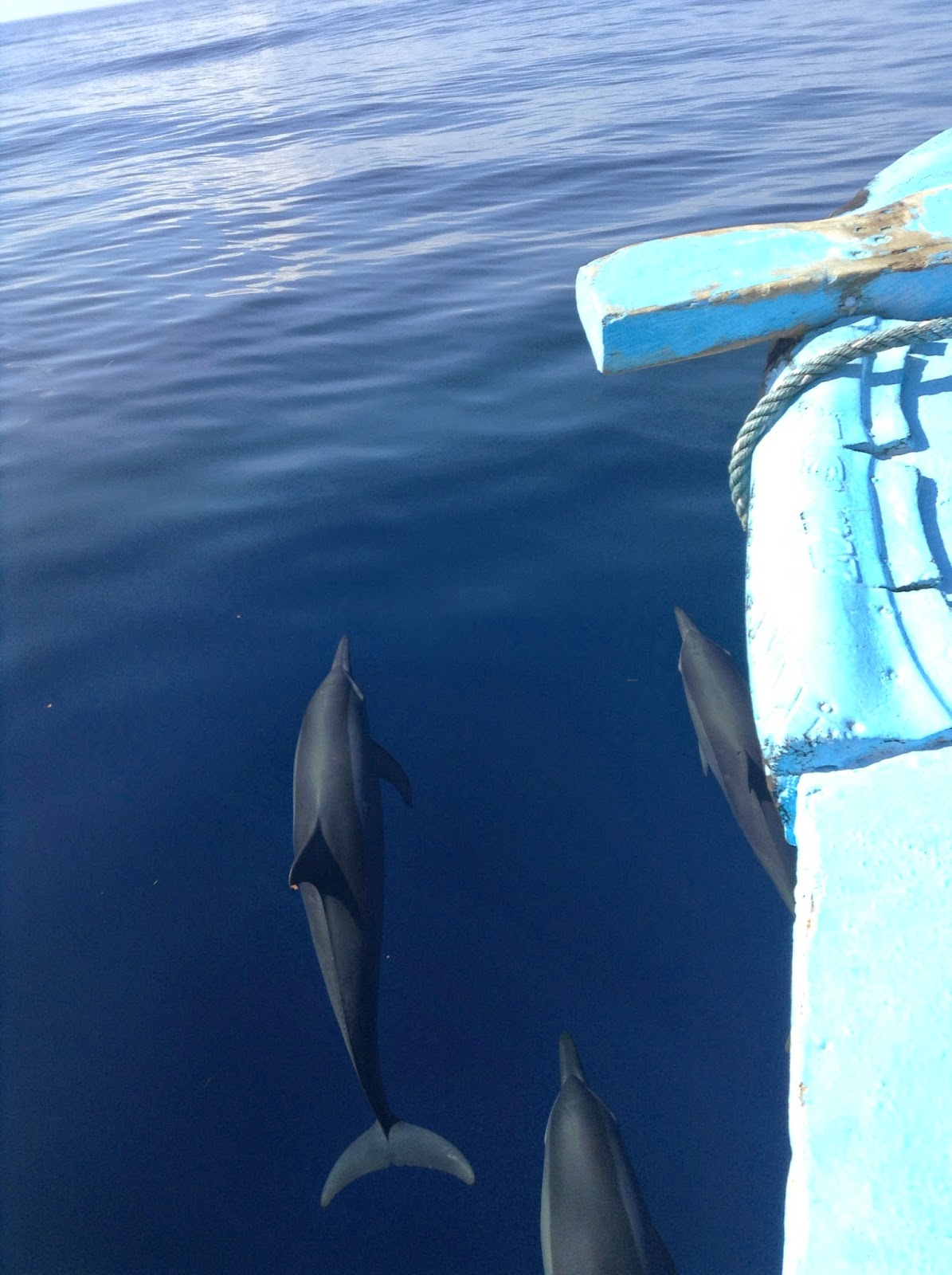 http://mytravel-asia.com/pois/159411-Dolphin-Watching-in-Pamilacan-Bohol