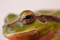 Detalle del rostro de la rana