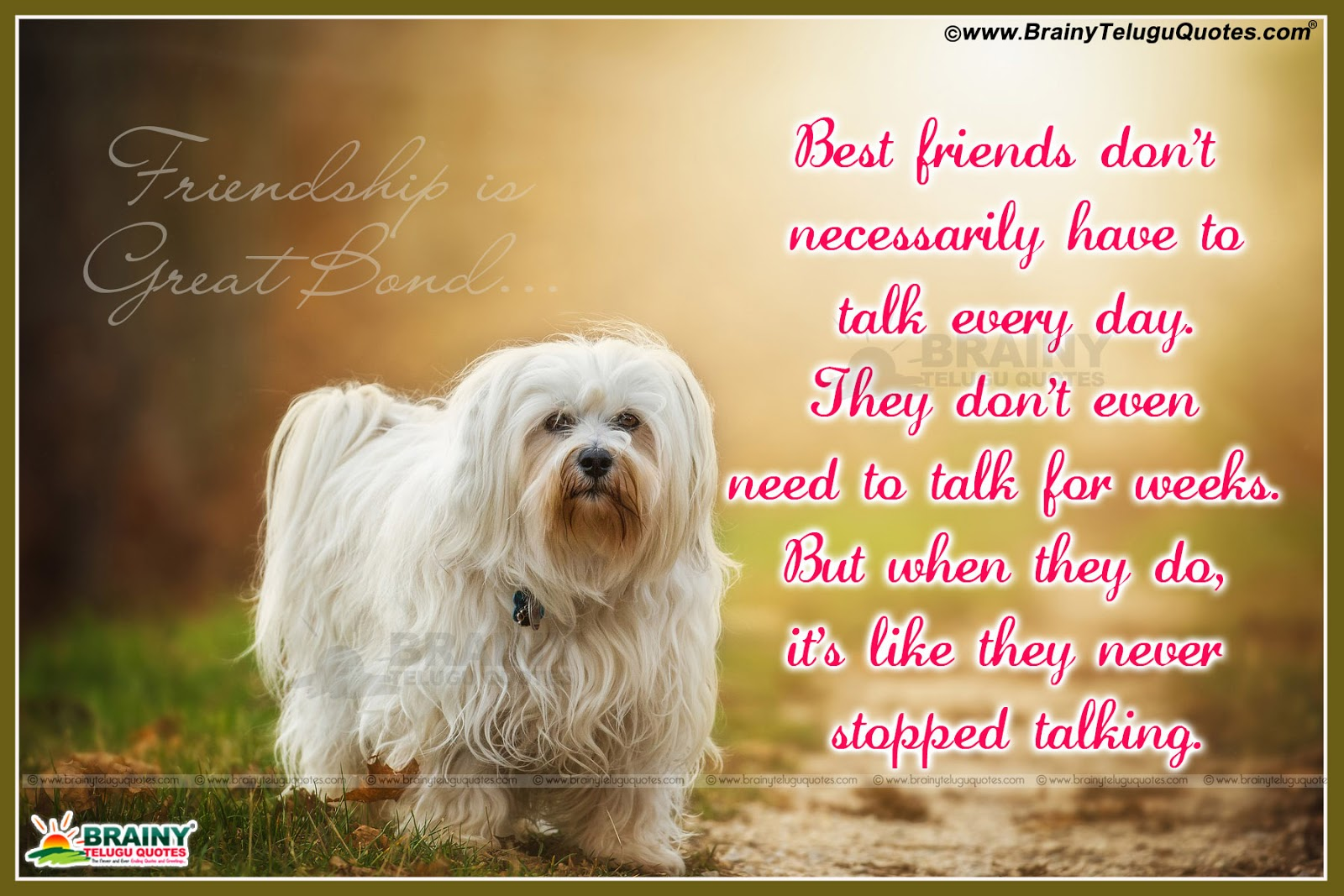 Nice friendship quotes with images