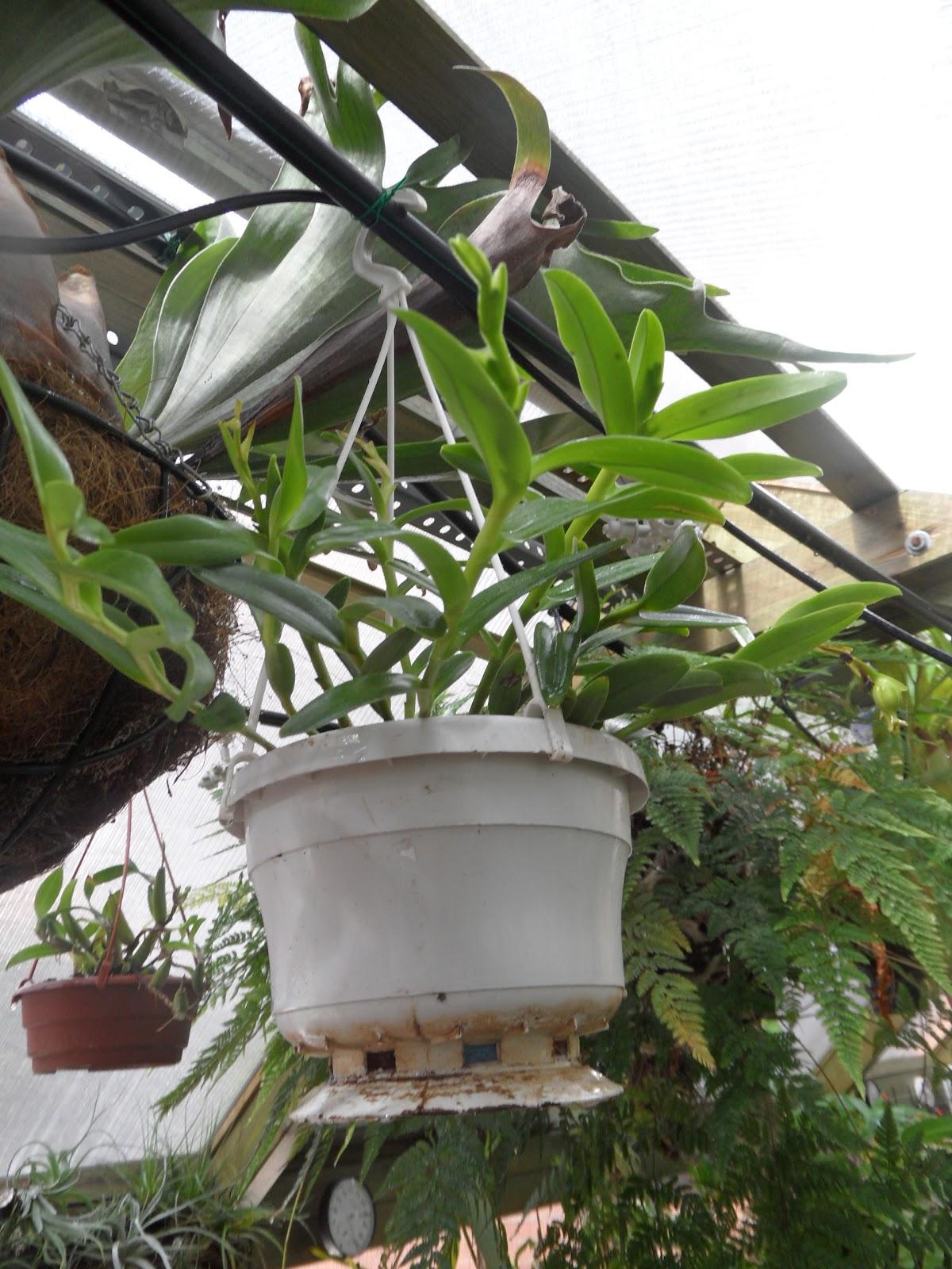 Orqu deas blog de angel mar macetas para orqu deas - Como cuidar orquideas en maceta ...