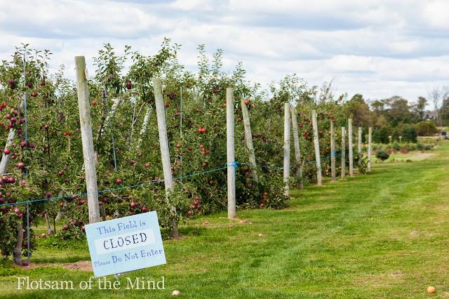 Apple Orchard - Flotsam of the Mind