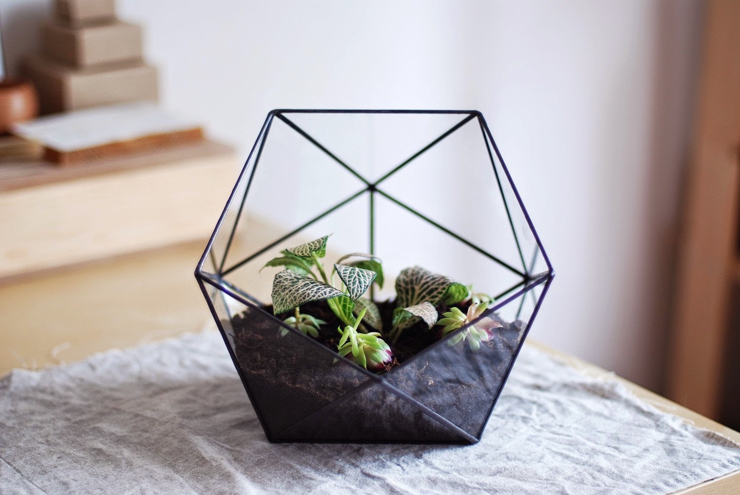 Because It S Awesome Terrarium Crush