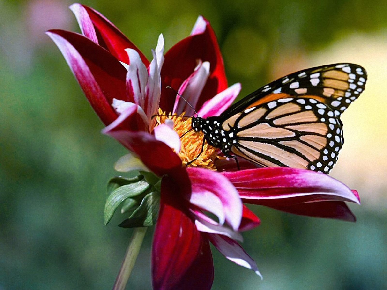 Sana el Planeta: Un logro en favor de la mariposa monarca