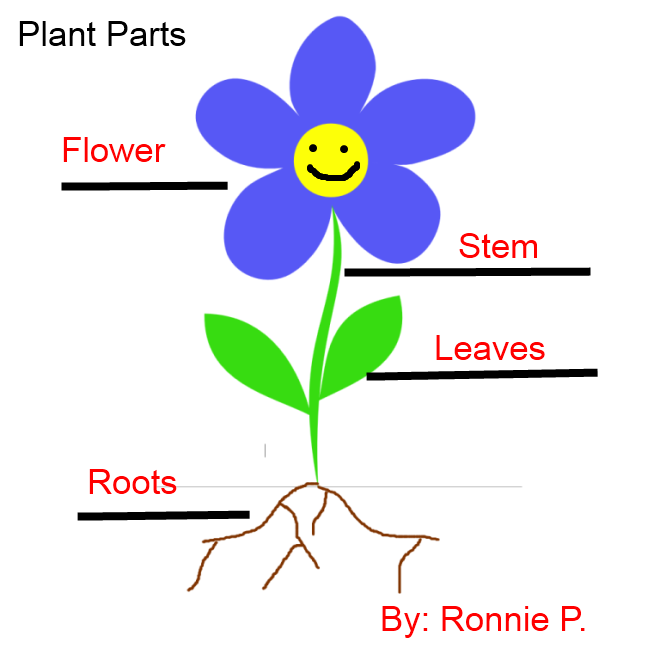 Parts of flower parts of plant kindergarten worksheet guide