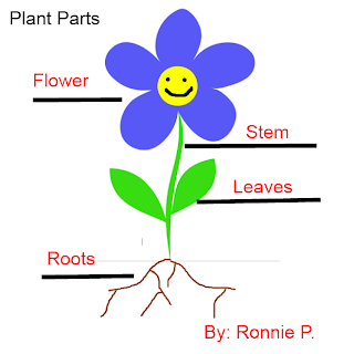 ... Parts Of A Plant Worksheet High School , Parts Of A Plant Worksheet