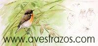Web Avestrazos