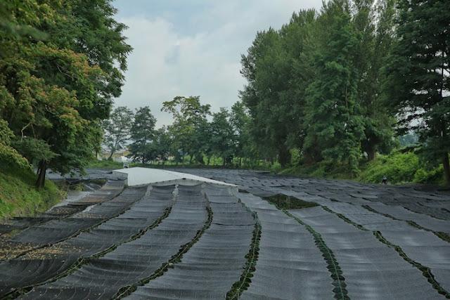"<a href=""http://mataram.info/things-to-do-in-bali/visitindonesia-banda-marine-life-the-paradise-of-diving-topographic-point-inward-fundamental-maluku/"">Indonesia</a>best destinations : All Things Wasabi At Daio Wasabi Farm"