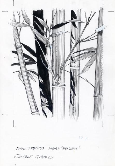Bamboo Drawings5