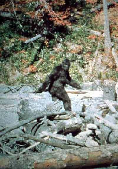 http://1.bp.blogspot.com/-nsRdmMIGS2w/Tbp2eeV6_DI/AAAAAAAAAHU/6JiGc4APn0k/s1600/patterson_bigfoot_lg.jpg
