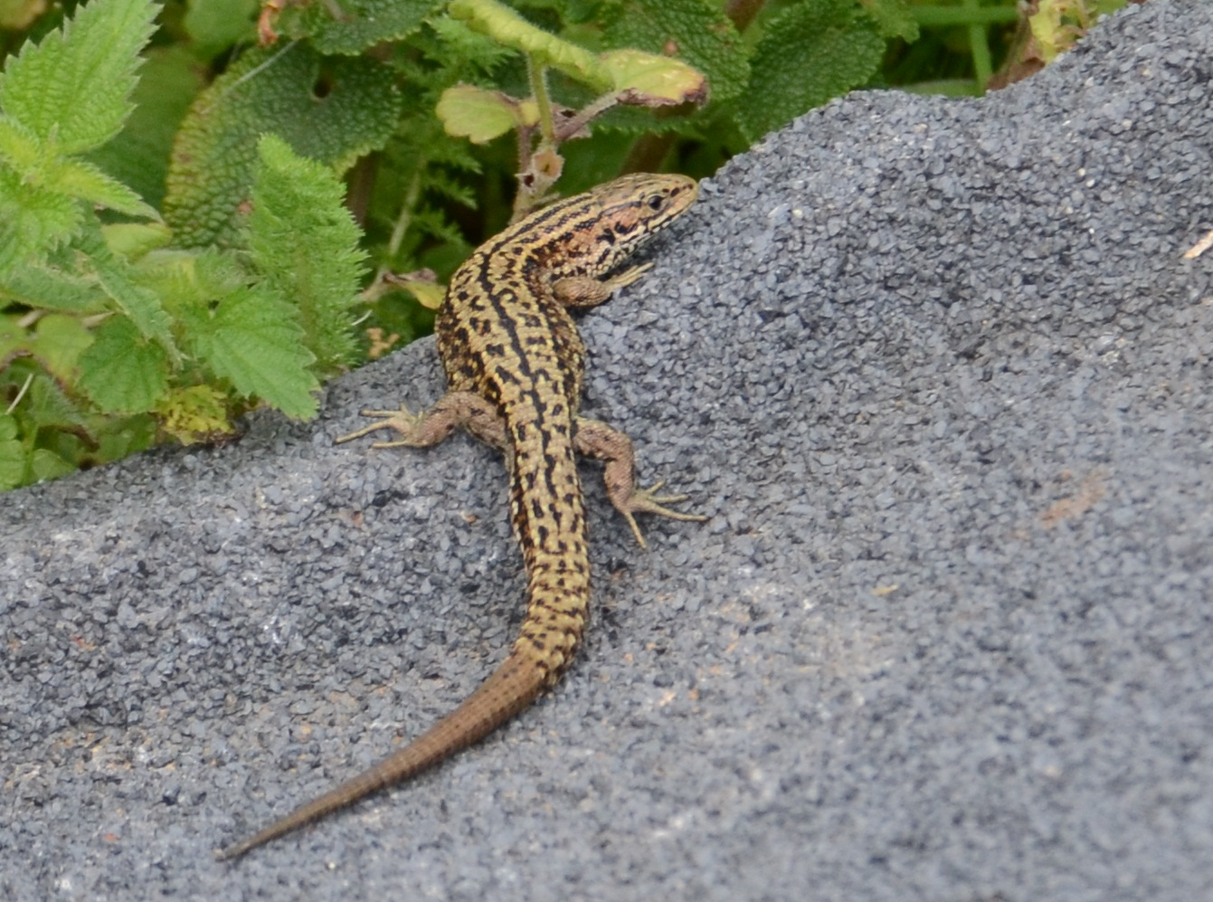 weston under lizard latin singles The cheapest way to get from birmingham to weston under lizard costs only £5, and the quickest way takes just 32 mins find the travel option that best suits you.