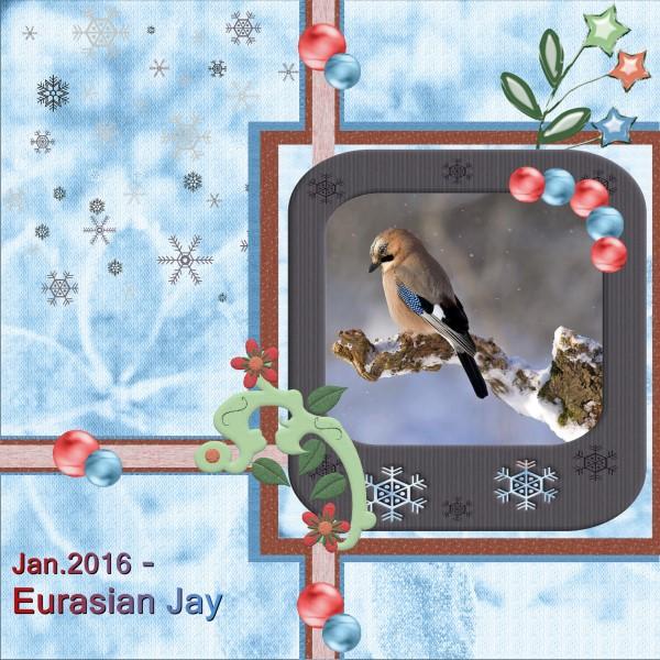 Jan.2016 - Eurasian Jay