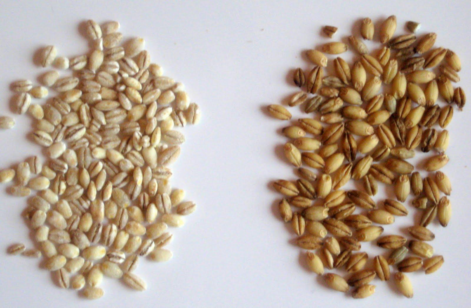 how to cook goya barley