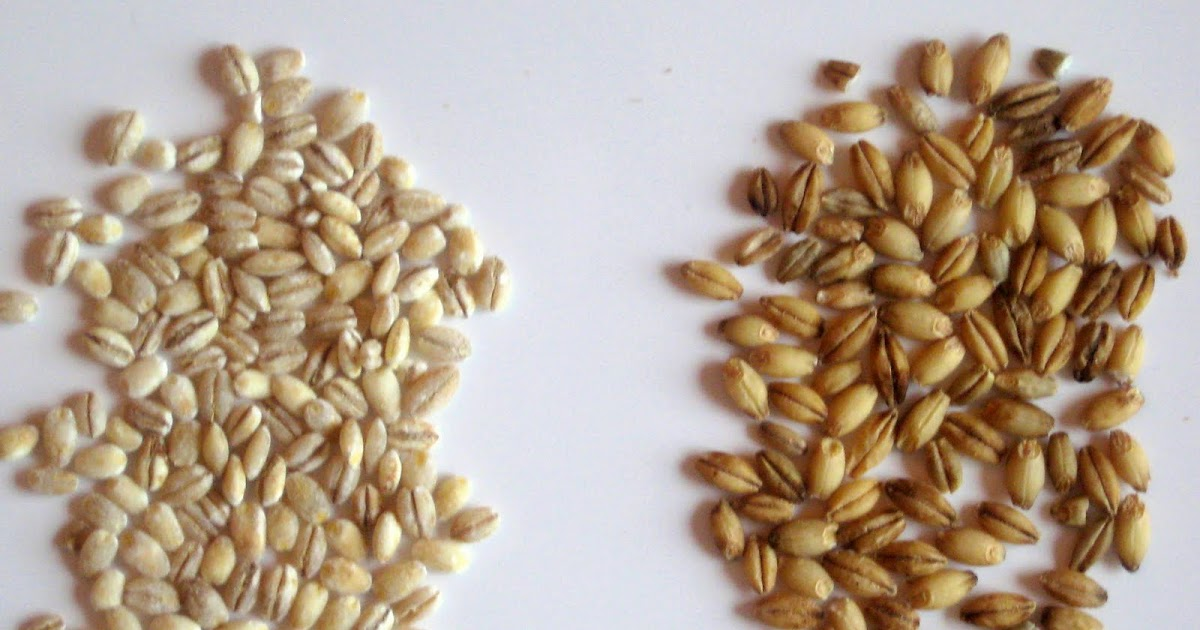how to prepare wheat germ uncooked