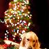 Πού είναι το δώρο μου;