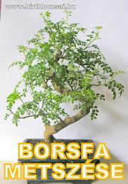BORSFA METSZÉSE - KATT A KÉPRE!