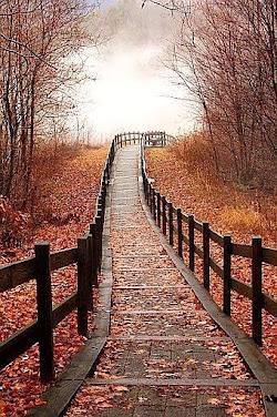 Um Caminho a Seguir