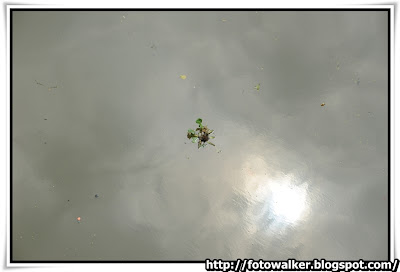 廣州 河心洲