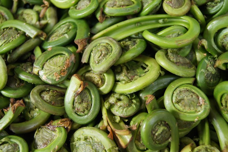 how to eat fiddlehead ferns