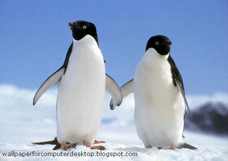 Two penguins | Animals