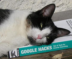 Cat on Google Hacks Book