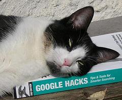 Cat on Google Hacks Book