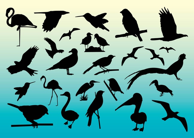 Free Birds Vector Silhouettes Graphics Download