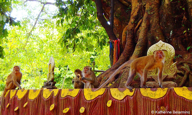 Monkeys at Wat Suwan Kuha (Wat Tham)