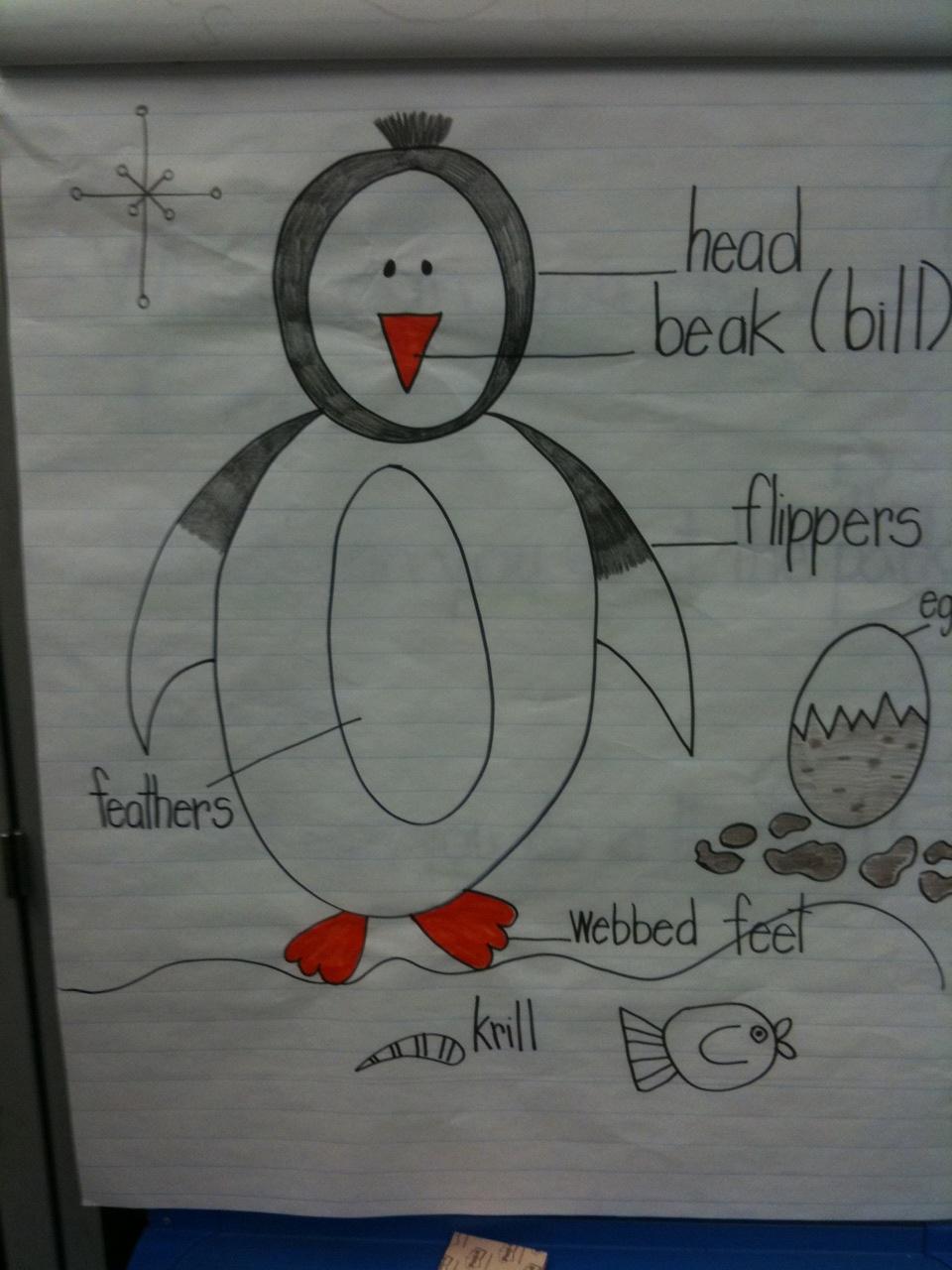 Kindergarten Crayons  Penguins Came To Sunny California