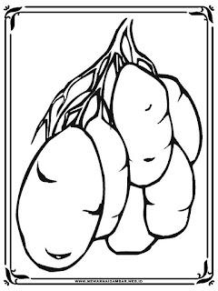 gambar mewarnai kentang