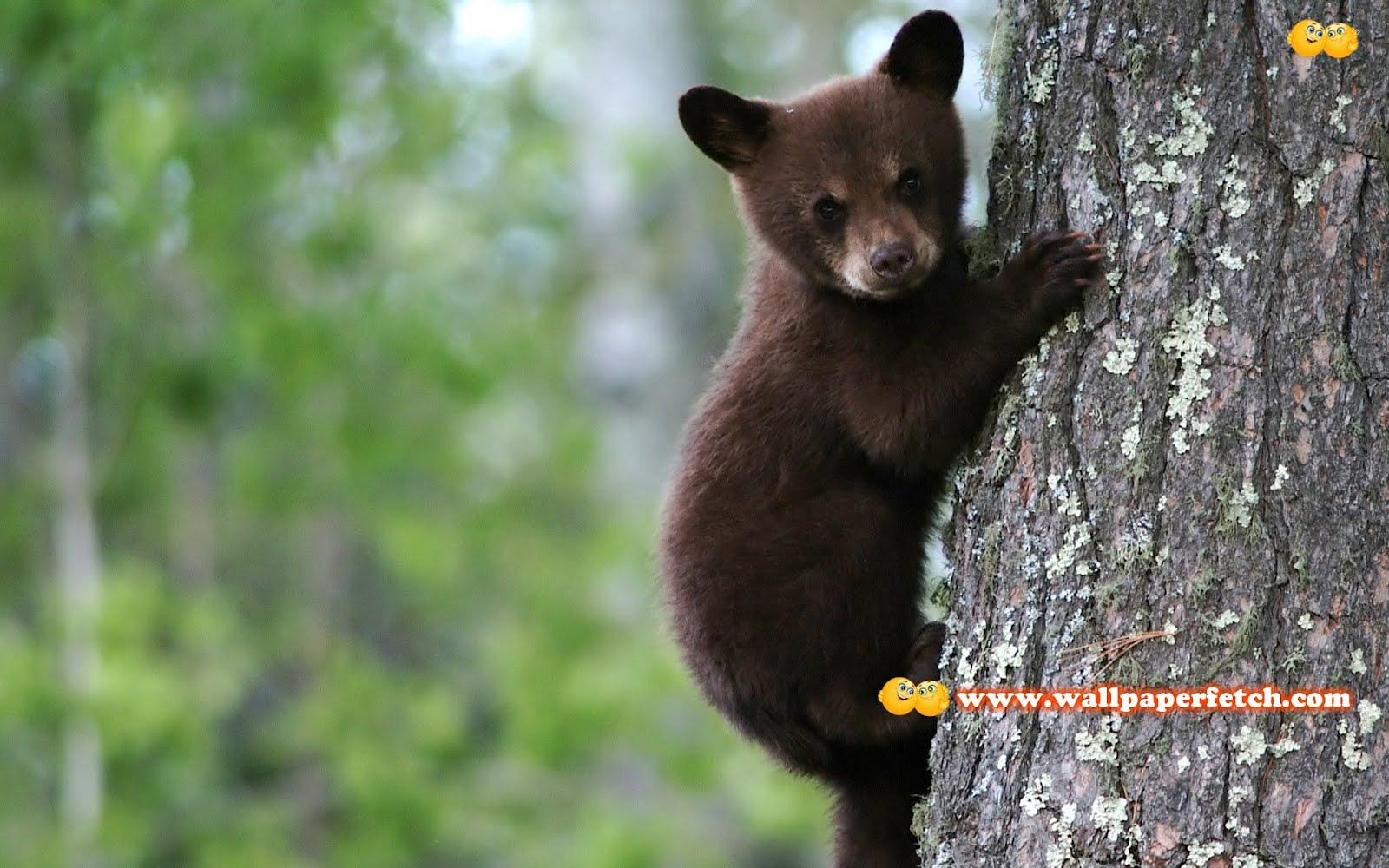 http://1.bp.blogspot.com/-nv6QNaq-5Ek/T1CoQ1F3J3I/AAAAAAAAMu8/D73CoA3oulY/s1600/bear-cub-7733-1920x1200.jpg