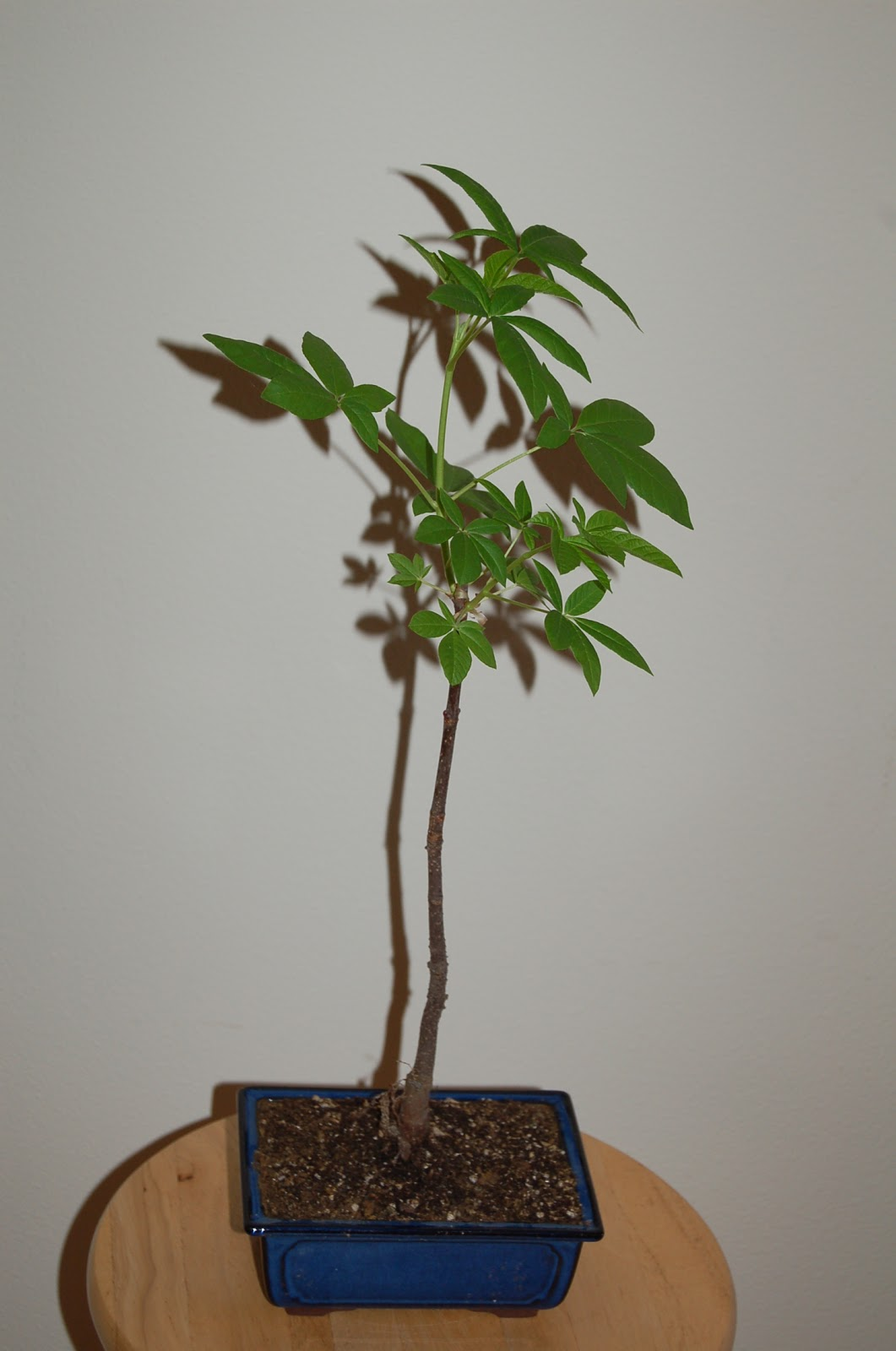 Nature39s Way Bonsai