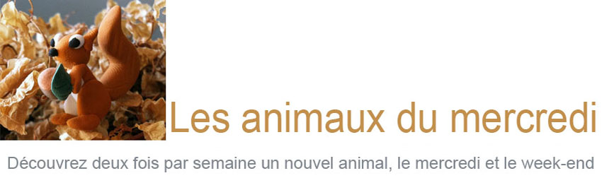 Les animaux du mercredi
